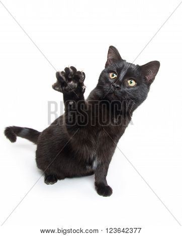 Cute Black Cat Swinging Its Paws