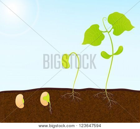 a vector background with green plant seedling