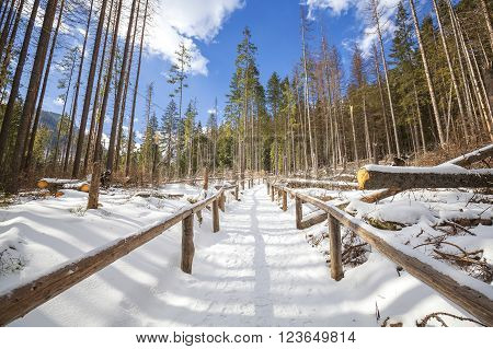Wooden handrail on the hiking pathway in forest, Tatra Mountains in winter, Poland