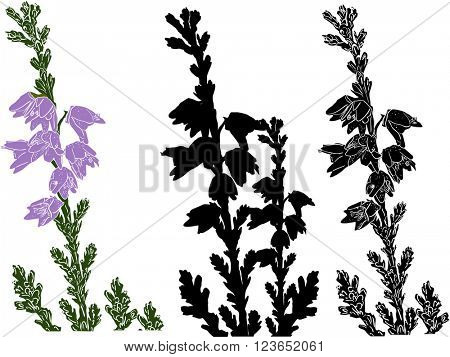 illustration with three heather branches isolated on white background
