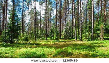 Sunny meadow at  summer forest