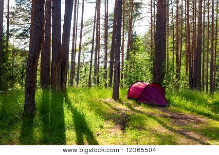 Red camping tent in a sunny forest