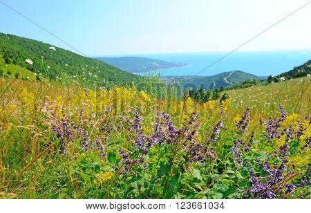 Salvia flowers on mountain meadow in Krasnodar Krai Russia