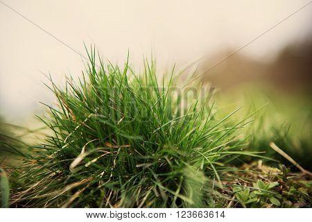 summer light landscape outdoor green grass detail
