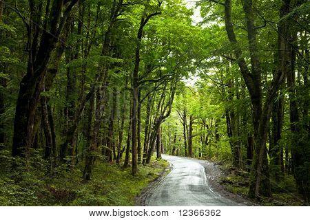 Dirt road through dense rainforest at New Zealand