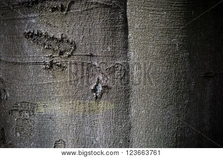 vintage brown and gray tree material structure