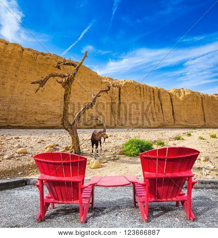 Two convenient red chaise lounges connected by small table stand for tourists. Mountain goat grazing in the dry tree. Walking route on  picturesque Black canyon