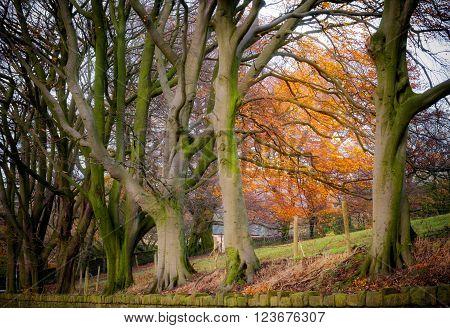 Row of trees in autumn season peak district,England