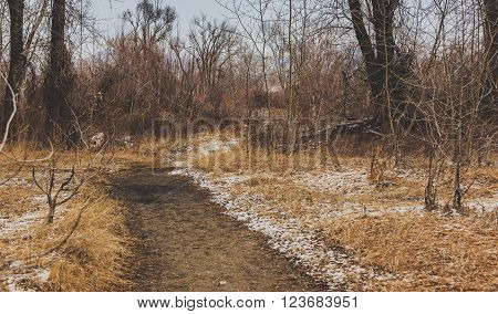 Trail going through the forest and trees.