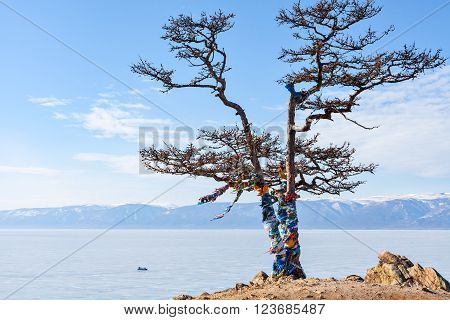 Lonely tree on a background of the holy Shamanka on cape Burhan. Olkhon Island in the Siberian Lake Baikal in winter.  Ice on Lake Baikal. Horizontal landscape. Russia.