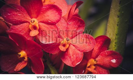 close up shot of orchids growing in Chaing Mai