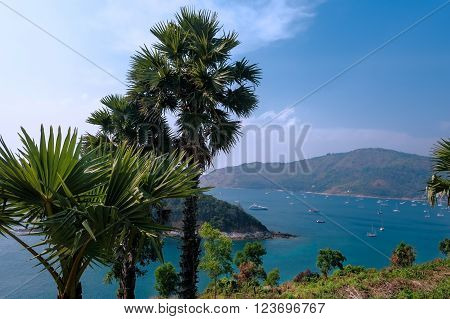 Palms in the beach. Yanui Beach located between Nai Harn beach and Promthep Cape Andaman sea Phuket Thailand