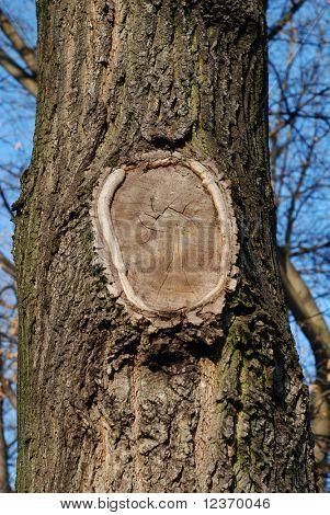 woodpile round