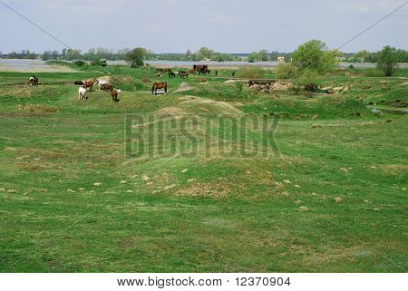 horses walking on meadow