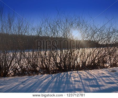 Sunset over the winter forest. The sun's rays make their way through the bushes