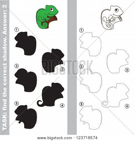 Iguana with different shadows to find the correct one. Compare and connect object with it true shadow. Visual game for children.