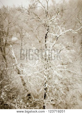 abstract scenes at ski resort during snow storm