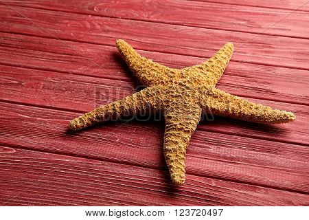 Starfish on a red wooden table, close up
