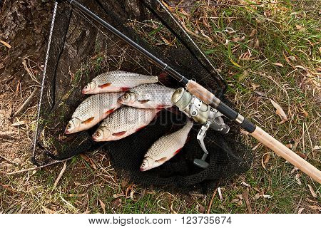 Catching Freshwater Fish And Fishing Rods With Fishing Reel.