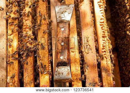 Close Up View Of The Working Bees And Beekeeper Knife
