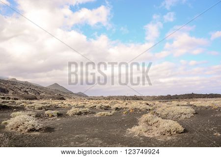 Desert landscape in Tenerife Canary Islands Spain