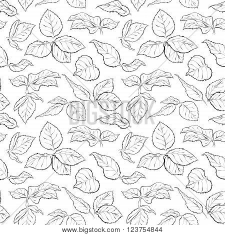 Hand drawn seamless pattern with foliage of rose. Monochrome leaf. Sketch of leaves isolated on white background. Black and white pencil or ink outline