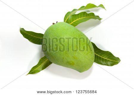 The green mango fruit on the white background