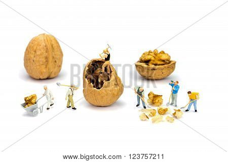 Team of miniature human figurines transporting content of walnut isolated on white background