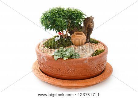 Miniature Garden in a Pot ,beautiful house plant