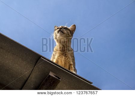 Funny Cat Pictures Cat sitting on the roof and Looking at the sky
