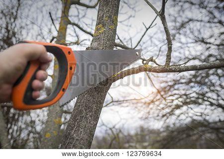Man cuts tree branches sawing. Spring training garden plot vegetation.