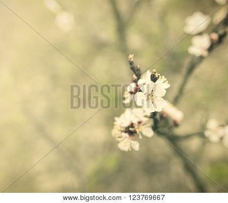 Blossoming spring tree. Image in vintage style.