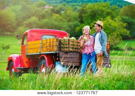 Senior couple harvesting fruit, standing at red vintage pickup truck, woman holding apple