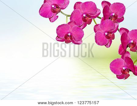 Colorful orchid flowers. Beautiful orchid flowers. Delicate flower