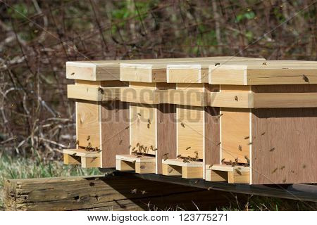 Close up of new honey bee nucleus hives on a stand in an apiary in late afternoon sunshine.