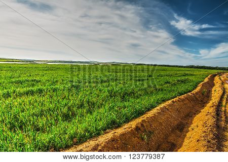 furrow in a green field under a blue sky
