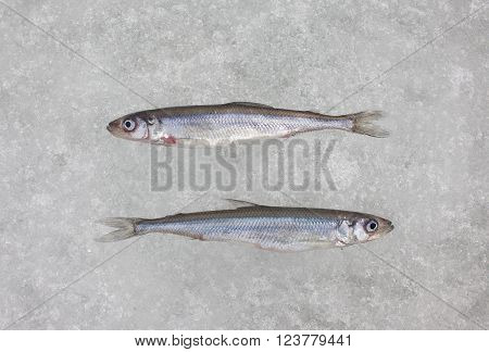 smelt fish on white ice close up