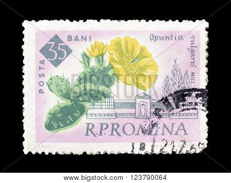 ROMANIA - CIRCA 1961 : Cancelled postage stamp printed by Romania, that shows Prickly pears.