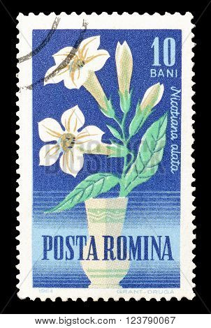 ROMANIA - CIRCA 1964 : Cancelled postage stamp printed by Romania, that shows Cultivated tobacco.