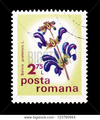 ROMANIA - CIRCA 1975 : Cancelled postage stamp printed by Romania, that shows Meadow Sage.
