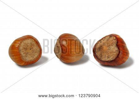 Macro of three hazelnuts isolated on white background