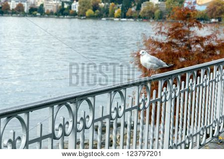 bird perched on the railing of Lake Geneva, Montreux, canton of Vaud, Switzerland