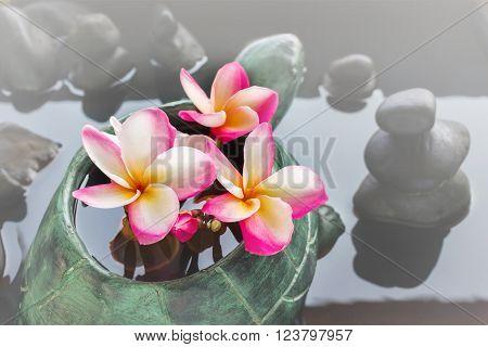 Beautiful Flower Plumeria Or Frangipani In Turtle Rock On Water And Pebble