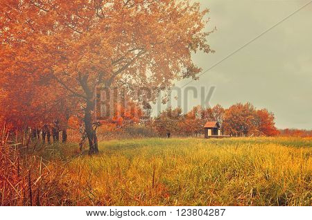 Autumn misterious landscape with lonely abandoned house in the deserted old oak grove in foggy cloudy weather. Soft focus and creative filter applied.