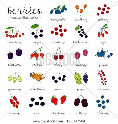 Hand drawn berries isolated on white background. Strawberry, goji, sea buckthorn, cherry, raspberry, barberry, mulberry, gooseberry, juniper, aronia, rose hips, honeysuckle, cloudberry, maqui.