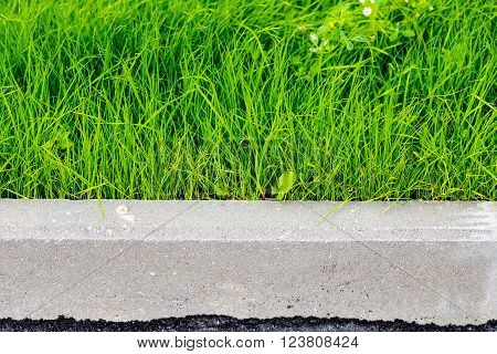 green grass, black asphalt and gray curbstone.  Improvement of the city. selective focus