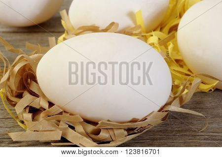 fresh duck eggs at on white background