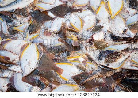 Caught ocean fish flounder on the deck of a fishing trawler.