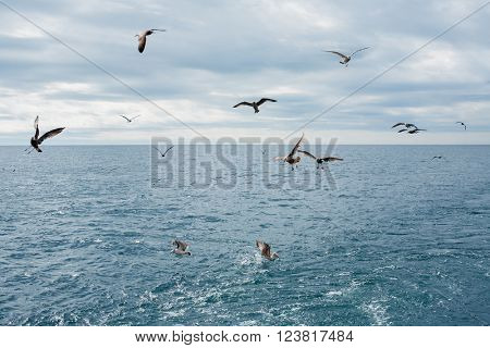 Seagulls fly over the sea on a summer day. Sea of Japan.