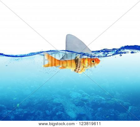 Fish disguised as shark in the sea